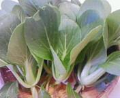 ミニチンゲン菜の収穫