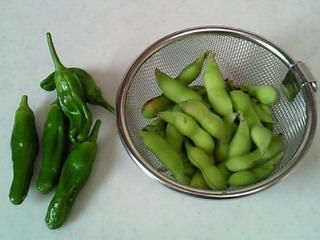 今日の収穫