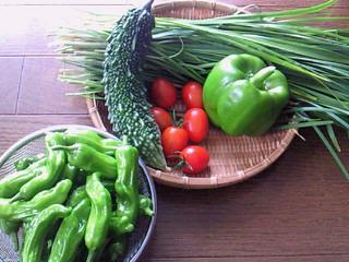 今年の野菜達
